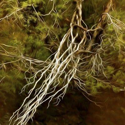 franklin tree falls